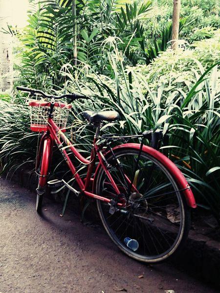 Surabaya City XperiaZ5 Bicycle XPERIA Phoneography