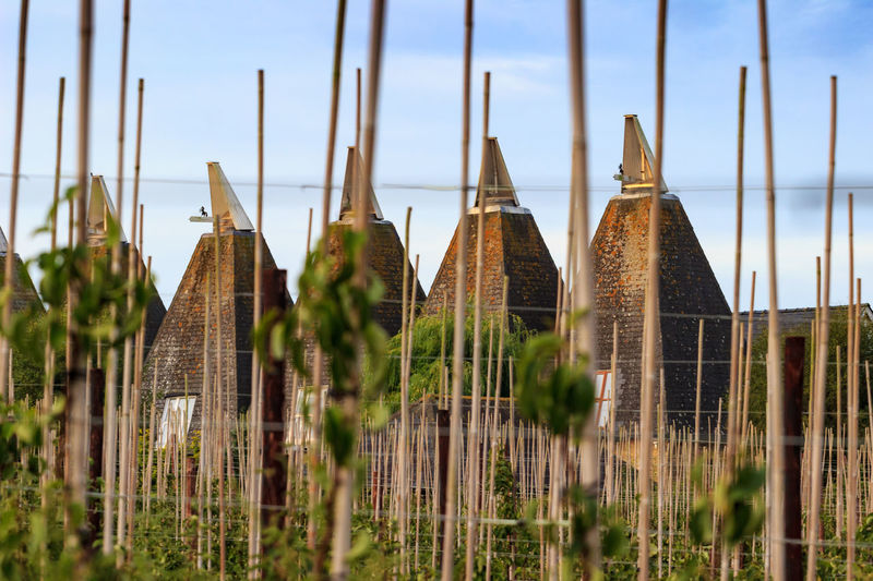 Oast House , Garden of England, Kent, England. Built Structure Architecture Nature No People Sky Outdoors Hops Beer Travel Destinations Tourism Getty Images Vivid International Shepherd Neame Iconic Buildings Village Rural Scene Countryside Landscape Plant Day Selective Focus Focus On Foreground Growth Close-up Building Exterior Clear Sky Land Water Beauty In Nature Wood - Material Building Grass Farm Architecture