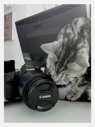 lovely Photography ... Cat Photocamera Photochallenge