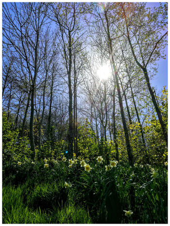 Outdoors Light And Shadow Outdoor Photography Structure And Nature Tourist Attraction  Textures The Den Backgrounds Growth Plant Beauty In Nature trees Daffodils sunlight