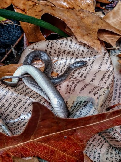 delicate, these grass snakes are harmless to humans, eat insects, and are eaten by birds. Animal Themes Animals In The Wild Bestoftheday Nature Photography Garden Photography Artphotography High Angle View Close-up Wildlife
