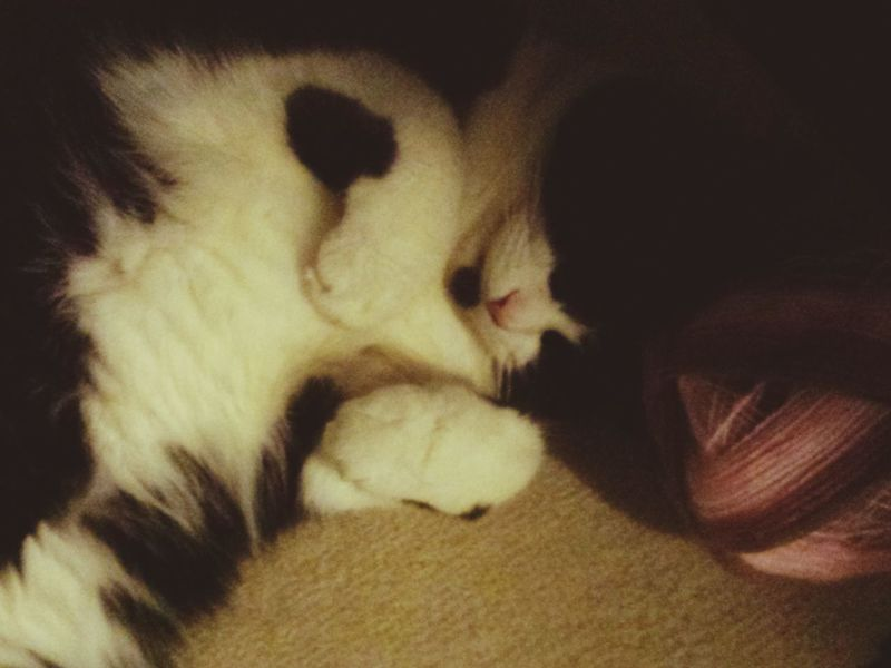 Cat Lovers Cat Cat♡ Cats Of EyeEm Cats Yarn Knitting Knitter Chrochet Chrochetaddict Cute Pets Cute Cats