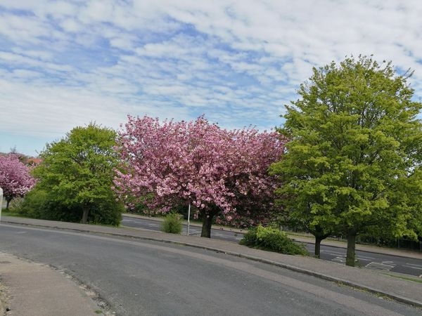 Tree Growth Flower Blossom Cloud - Sky No People Springtime Day Outdoors Beauty In Nature Nature Sky Freshness Natural Pattern Pink Green