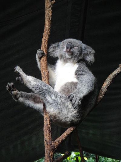 Monkey sitting on tree branch in zoo