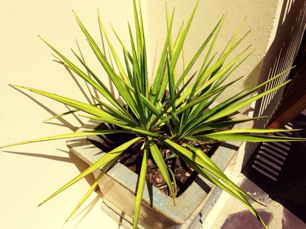 Plant spikes