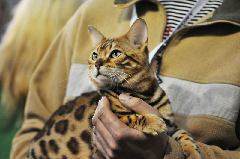 Close-up of man holding kitten