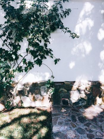 Bits of Ojai - Wandering Vines Taking Photos Sunlight Sunlight And Shadow Architecture_collection Architecture Nature Photography Nature Bright