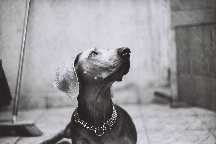 awaiting B@w Eyes EyeEmNewHere EyeEm eyeemphoto Headshot Close-up Pets Dog