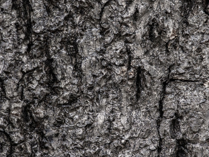Abstract Abstract Backgrounds Backgrounds Bark Close-up Extreme Close-up Full Frame Natural Condition Natural Pattern Nature No People Outdoors Pattern Plant Plant Bark Rough Textured  Textured Effect Toughness Tree Tree Trunk Trunk
