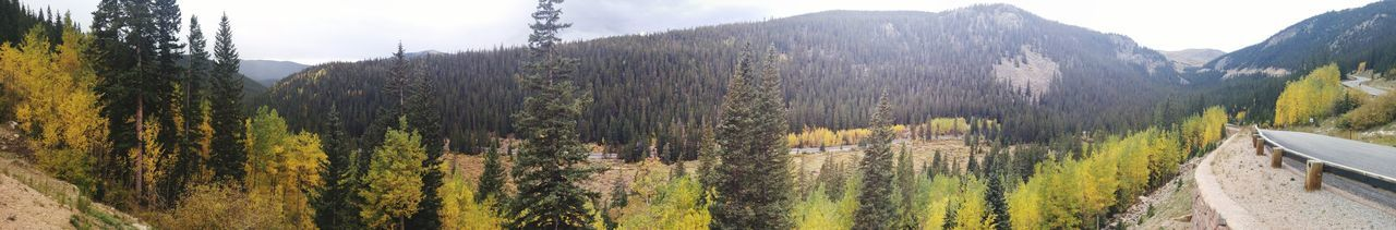 Panorama Tree Beauty In Nature Day Colorado Landscape Fall Colors Mountain