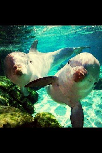 Quiero Mar!