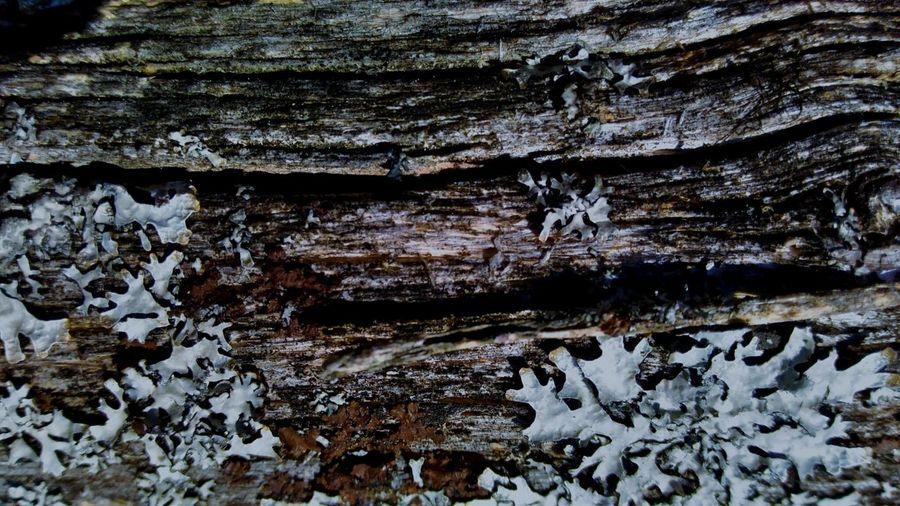natural material Plant Pattern фактура фон лишайник староедерево деревянный эко созданоприродой натуральный природные узоры интересный Created By Nature Eco Rustic Wood Moss & Lichen Lichen On A Tree Oldtree Treeovermoss Tree Backgrounds Full Frame Textured  Pattern Rough Bark Tree Trunk Close-up Lichen