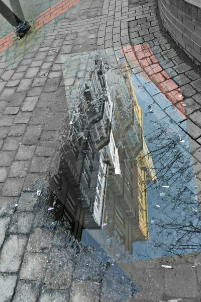 High Angle View Outdoors Day No People Reflections Water Tree Inception Puddle