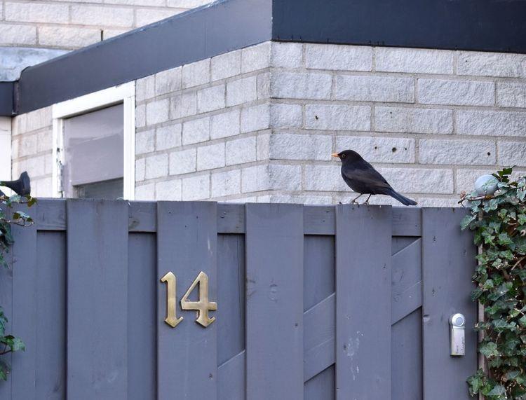 Johan? Johancruyff 14 Animals Birds Art Design Morning Walk