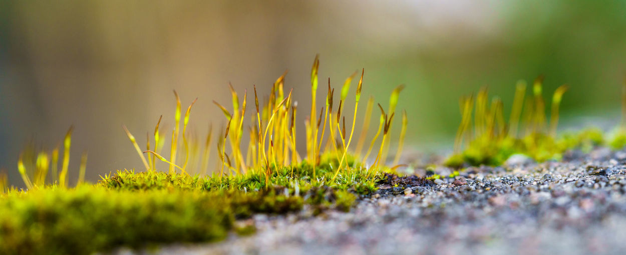 Beauty In Nature Beginnings Blade Of Grass Close-up Day Field Fragility Freshness Grass Green Color Growth Land Macro Moss Nature No People Outdoors Plant Selective Focus Surface Level Yellow