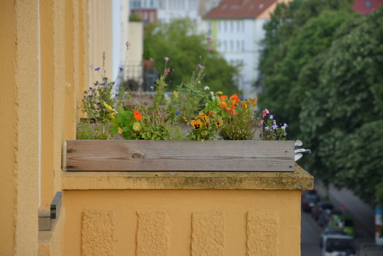 Close-up of potted plant against building