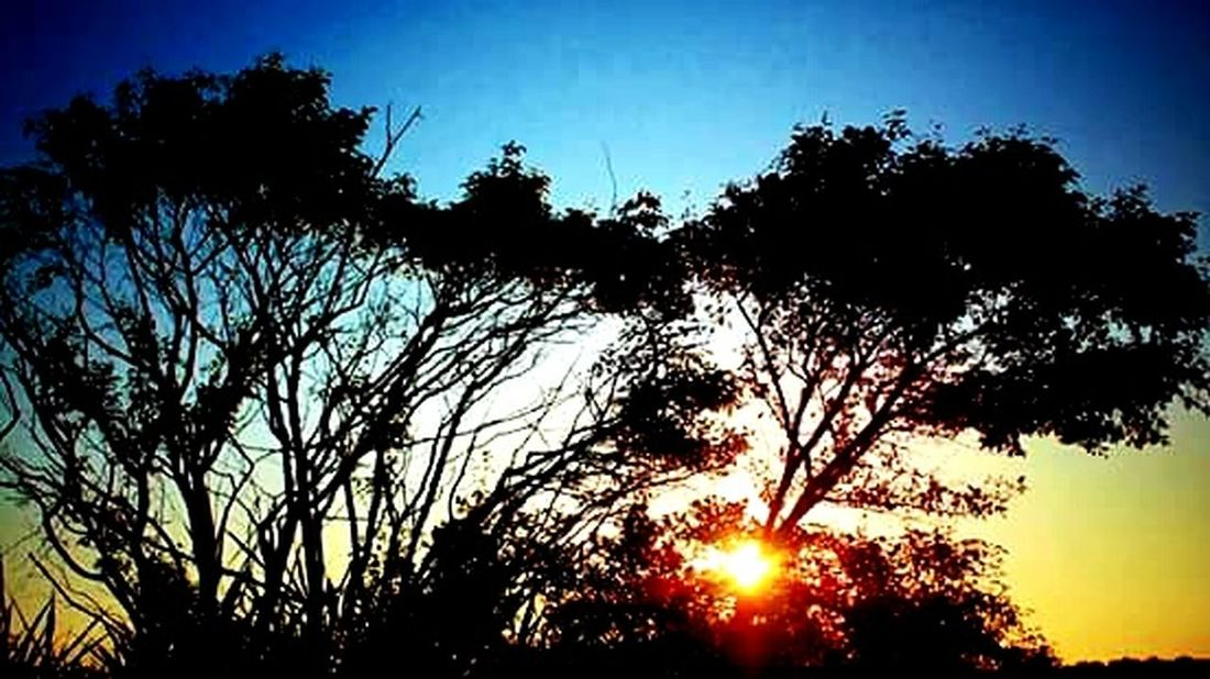 Tree_collection  Taking Photos Naturelovers Nature_collection Nature On Your Doorstep Colors Of Nature Tree And Sky Sunset_collection EyeEm Sunset Sunset Silhouettes Harkness State Park Waterford, CT United States