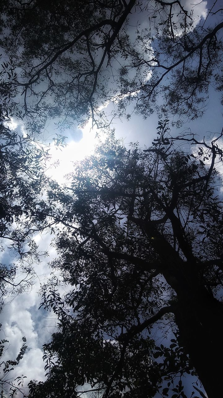 LOW ANGLE VIEW OF SUNLIGHT STREAMING THROUGH SILHOUETTE TREES