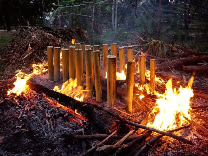 Bonfire on wooden log in forest