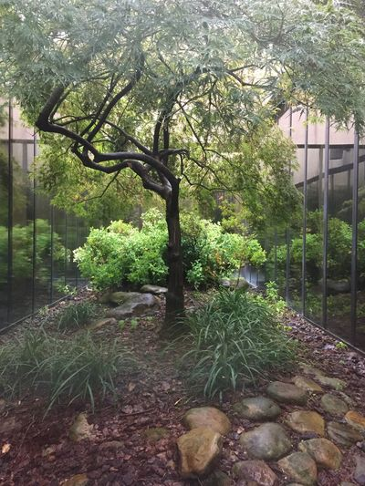 Growth Plant Tree Day Outdoors No People Nature Tranquility Building Exterior Beauty In Nature