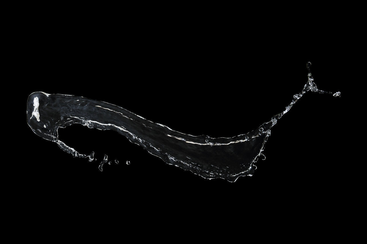 studio shot, black background, copy space, water, motion, no people, splashing, indoors, nature, close-up, drop, one animal, night, sea, design, cut out, mid-air, ice, purity, marine