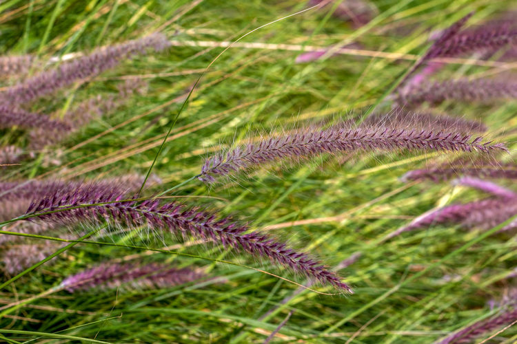 Plant Growth Green Color Beauty In Nature Nature No People Close-up Plant Part Leaf Day Grass Outdoors Focus On Foreground Tranquility Selective Focus Field Fragility Land Vulnerability  Freshness Softness Purity