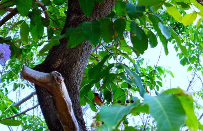 Tree Leaf No People Branch Low Angle View Green Color Day Outdoors One Animal Nature Growth Tree Trunk Hanging