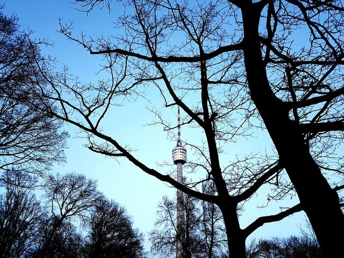 Good evening a good night. Tree Sky Low Angle View Nature Blue Branch Outdoors No People Tranquility Clear Sky Silhouette Beauty In Nature Day Close-up TV Tower Taking Photos Cloud - Sky EyeEm Best Shots Stuttgartmobilephotographers Eyeem0711 First Eyeem Photo Tree Fragility Nature Growth