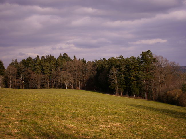 little forest Baden-Württemberg  South Trees Beauty In Nature Blue Sky Clouds Clouds And Sky Day Field Forest Germany Grass Idyllic Landscape Landscapes Nature No People Outdoors Scenery Scenics Sky Tranquility Tree Trees And Sky Wallpaper