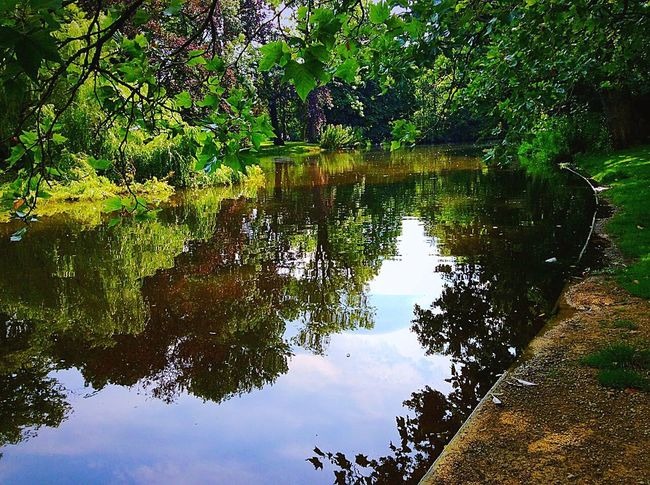 Nature Photography Color Palette Colour Of Life Reflections Vondelpark Amsterdam Pond Life Pond Water Lights And Reflection Adapted To The City The Great Outdoors - 2017 EyeEm Awards Neighborhood Map Sommergefühle Perspectives On Nature