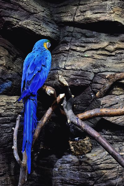 Birds 🕊 Bird Blue Animal Themes One Animal Perching Animals In The Wild Animal Wildlife No People Nature Branch Macaw Beauty In Nature Macaw Parrot Parrot Blue Feathers Bird Photography