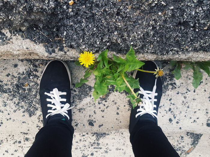 Low Section Shoe Human Leg Human Body Part Human Foot Flower Dandelion Personal Perspective One Person Day Standing Outdoors Leaf Real People Lifestyles One Man Only Men Nature Close-up Only Men Flower Adult Me Girl Out Of The Box