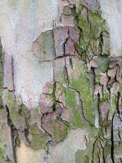 Nature Trees Treetastic Beautiful Bark