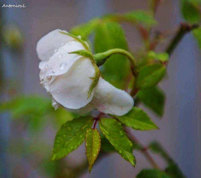 Flower Leaf Close-up Plant