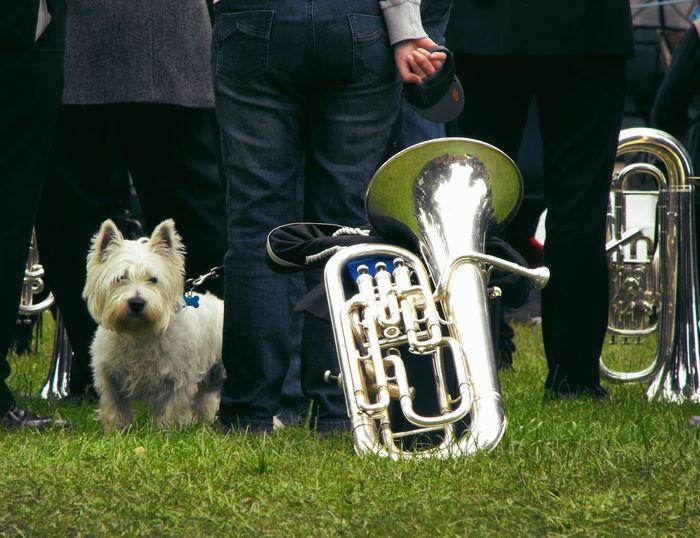 A Dog & a Band ... Random Orchestra Brass Band Musical Instruments Doggy собака оркестр