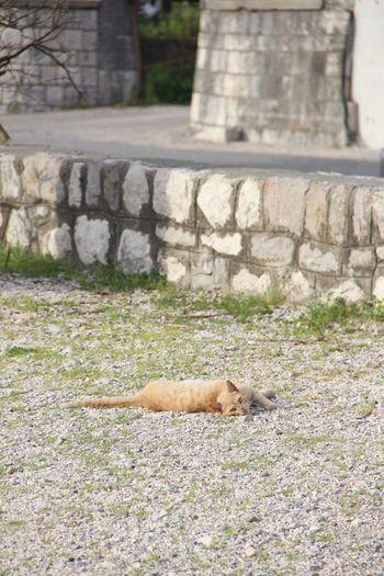 Cat on the beach on the Bay of Kotor Kotor Kotor Bay Bay Of Kotor Kotor Kotor, Montenegro Montenegro Balkans Beach Cat Stray Cat Pets Animal Cat On Beach