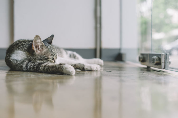 Animal Themes Cat Close-up Day Domestic Animals Domestic Cat Feline Indoors  Lying Down Mammal No People One Animal Pets Relaxation