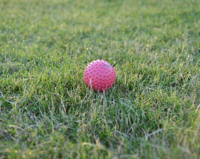 Grass Lawn Ball Spiky Ball Red Ball Park Depth Of Field Playing