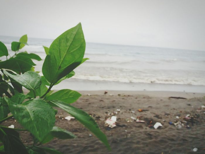 The foreground doesn't always cover up the background Rain Environment Awareness Metaphorical Photography Beach Nature Sea Leaf Green Color Beauty In Nature No People Plant Water Outdoors Close-up