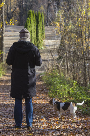 Rear view of woman and beagle. Rear View Mammal One Animal Domestic Animals One Person Pets Real People Woman Beagle Real Life Candid Full Length Tree Warm Clothing Lifestyles Pet Owner Hood - Clothing Nature Outdoors Pathway Autumn Leaves Fallen
