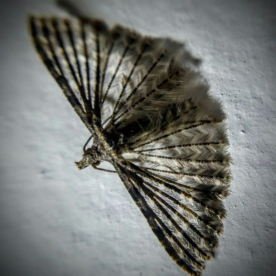 This little guy is only about the size of my thumbnail. Gotta love macro Macro Gabriola Bugs Wings Delicate Photojojo