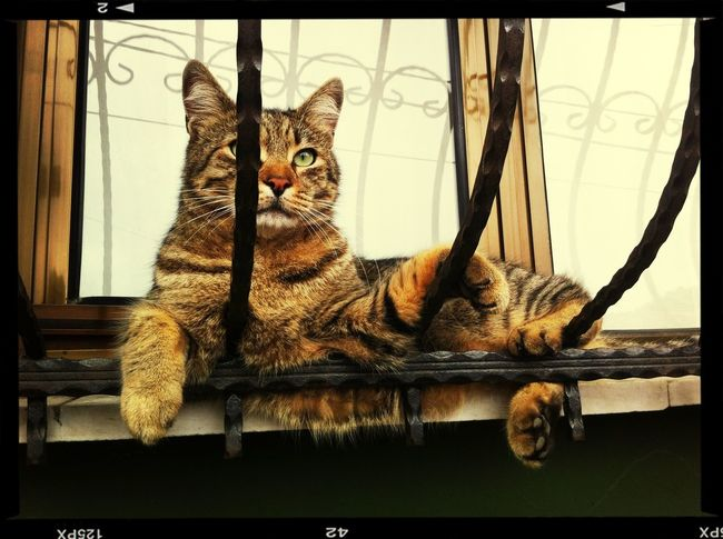 Cat Cute Pets Animal Love Pet Photography