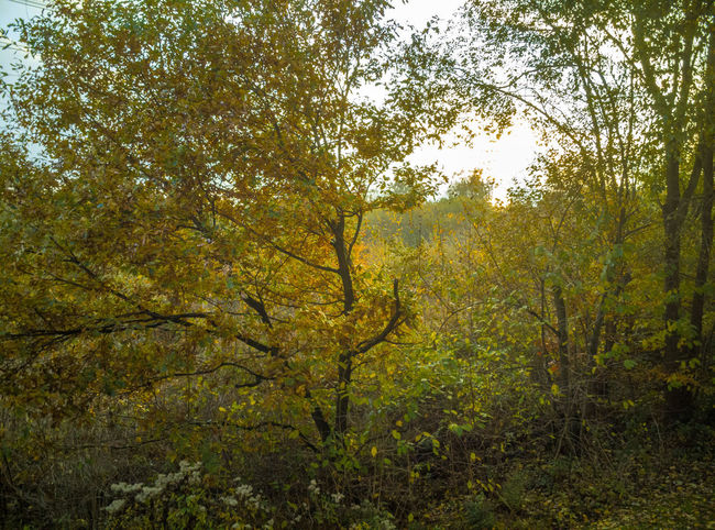 Autumn Beauty In Nature Change Day Environment Foliage Forest Growth Land Landscape Lush Foliage Nature No People Non-urban Scene Outdoors Plant Scenics - Nature Tranquil Scene Tranquility Tree Tree Canopy  WoodLand