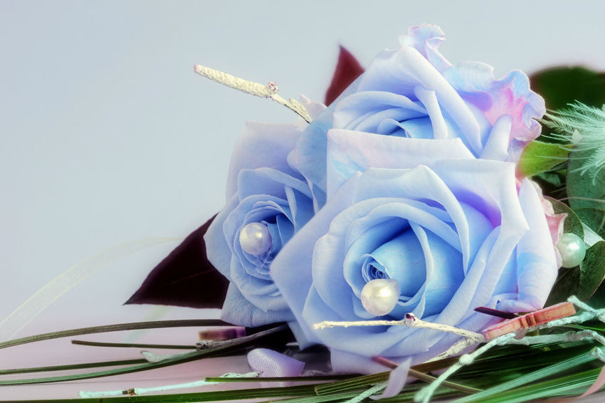 Blue beauties - A bouquet of three blue roses Beauty In Nature Blue Close-up Flower Flowers Fragile Fragility Makro_collection Nature No People Rose - Flower Roses, Flowers, Nature, Garden, Bouquet, Love, Roses_collection Roses🌹 Valentine's Day