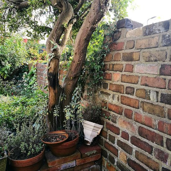 Brick Wall Plant Tree Trunk Wall - Building Feature Close-up Potted Plant Garden Garden Photography Urban Landscape Urban Garden