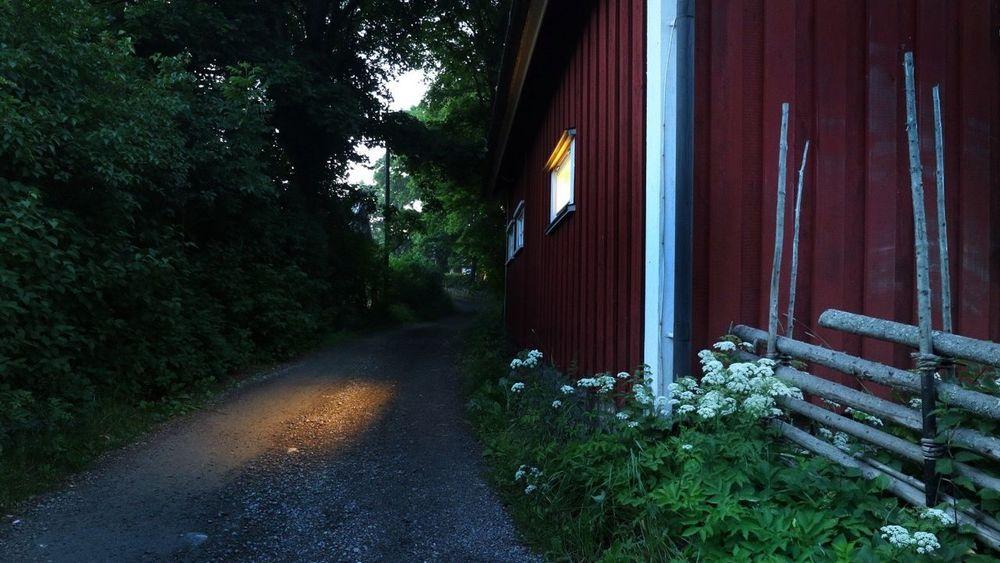 Light from a window at midnight at midsummer Falurödfärg Gärdesgård Flowers Road Way Nightphoto Longexposurephotography Midsummer Night Midsummer In Sweden
