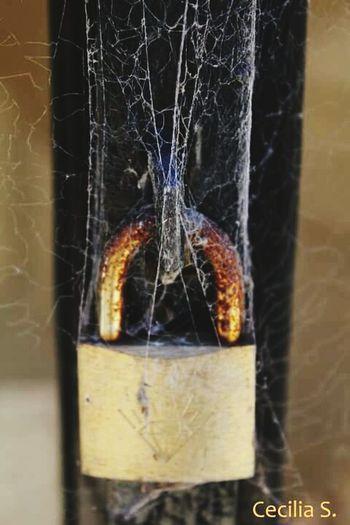Resguardando algo olvidado. Padlock Spiderweb Oxide Cemetery