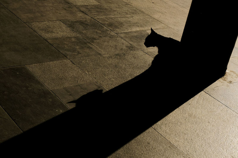 Shadow Cat Domestic Cat Domestic Pets Mammal Feline High Angle View One Animal Domestic Animals Flooring Vertebrate Sunlight Day Nature Footpath People Silhouette Outdoors Tiled Floor Paving Stone Focus On Shadow The Art Of Street Photography