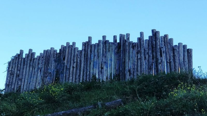 Beyond the wall. Nature Tree Wood Sky Wood - Material Wall Wall - Building Feature Mornings Low Angle View