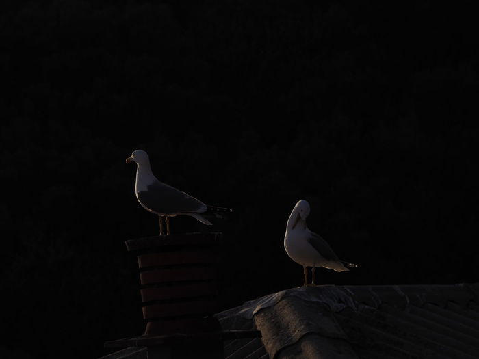 Low angle view of seagull perching on wood against sky